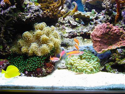 Aquarium bodem kopen