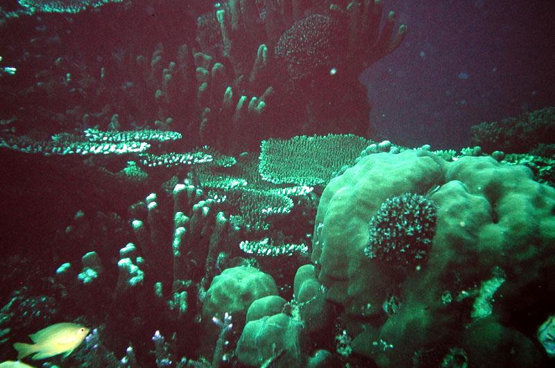 bedreiging voor het koraal
