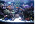 Aquarium_linkezijde
