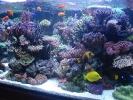 Aquarium_voor